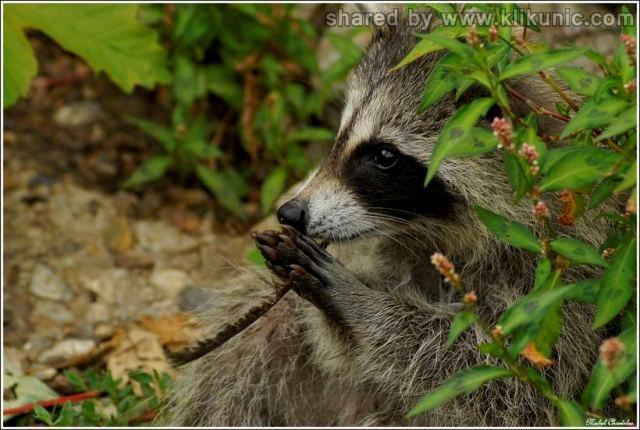http://4.bp.blogspot.com/-8R_9Mps0Cpo/TXWBGVEnaXI/AAAAAAAAQKs/Rknt1NJb3Dw/s1600/these_funny_animals_632_640_07.jpg