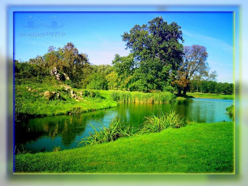 Matka Natura Rzeka Drzewa
