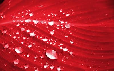 HD Nature Desktop wallpaper. Red color