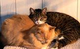Fotografías de gatos, gatitos y mininos