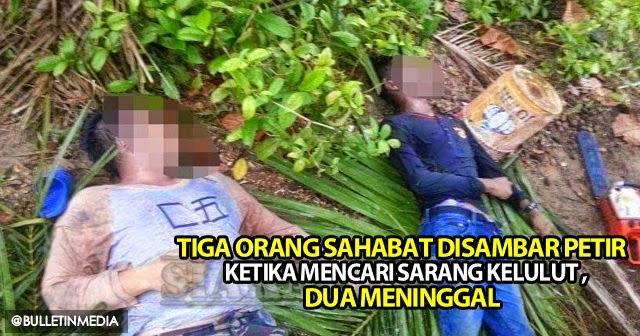 Tiga Orang Sahabat Disambar Petir Ketika Mencari Sarang Kelulut, Dua meninggal