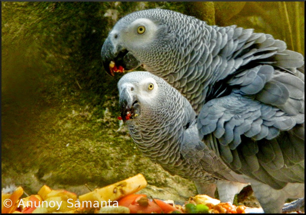 my pet bird parrot essay
