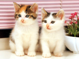 twin cats, courtesy of Wallpaper Cube