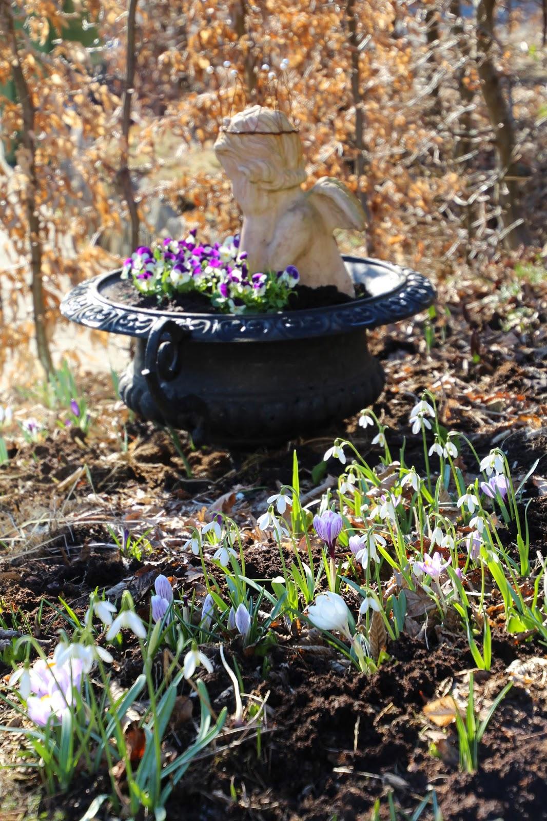 avenbokhäck trädgård blogg