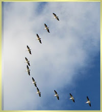 Pelicans Over Kansas