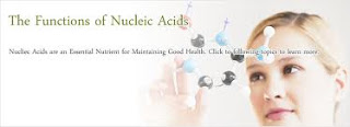 function of nucleic acids in the human body
