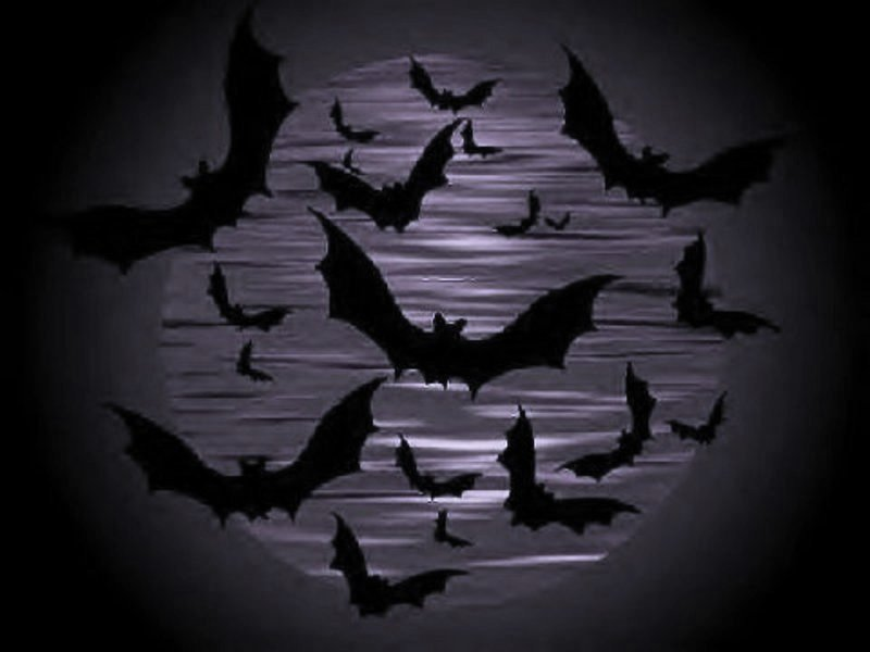 Halloween wallpapers for Animated flying bat decoration