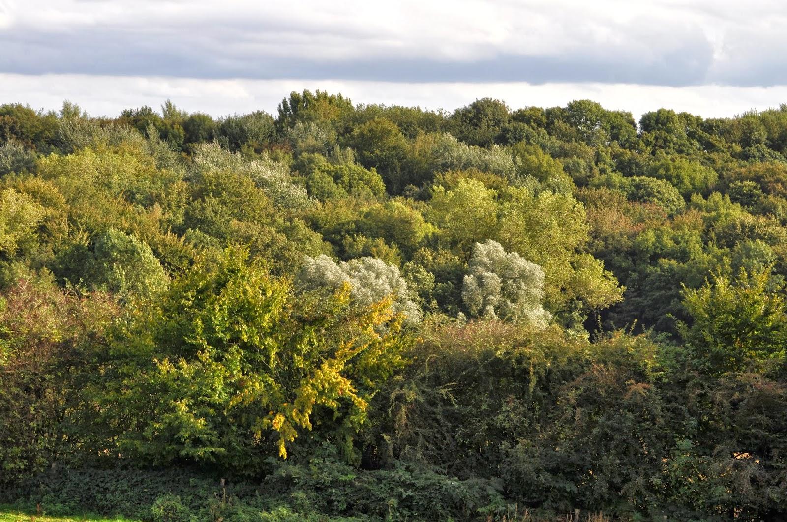 Jardin de la sauvagine melting pot de feuillus sur nos for Jardin ula ula
