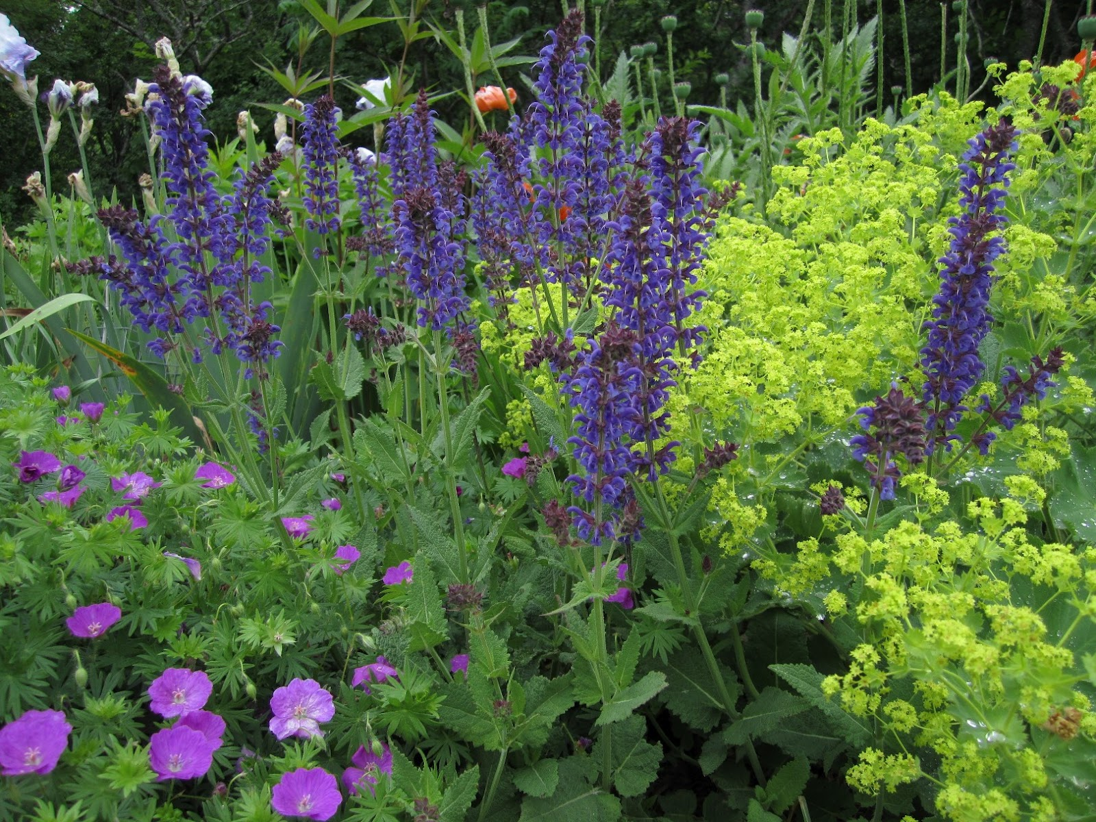 Rocky Coast News Tending The Perennial Garden Ii