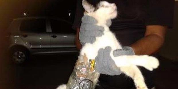 kucing menyelundupkan barang