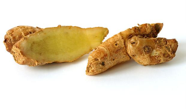Kencur Kaempferia galanga L.