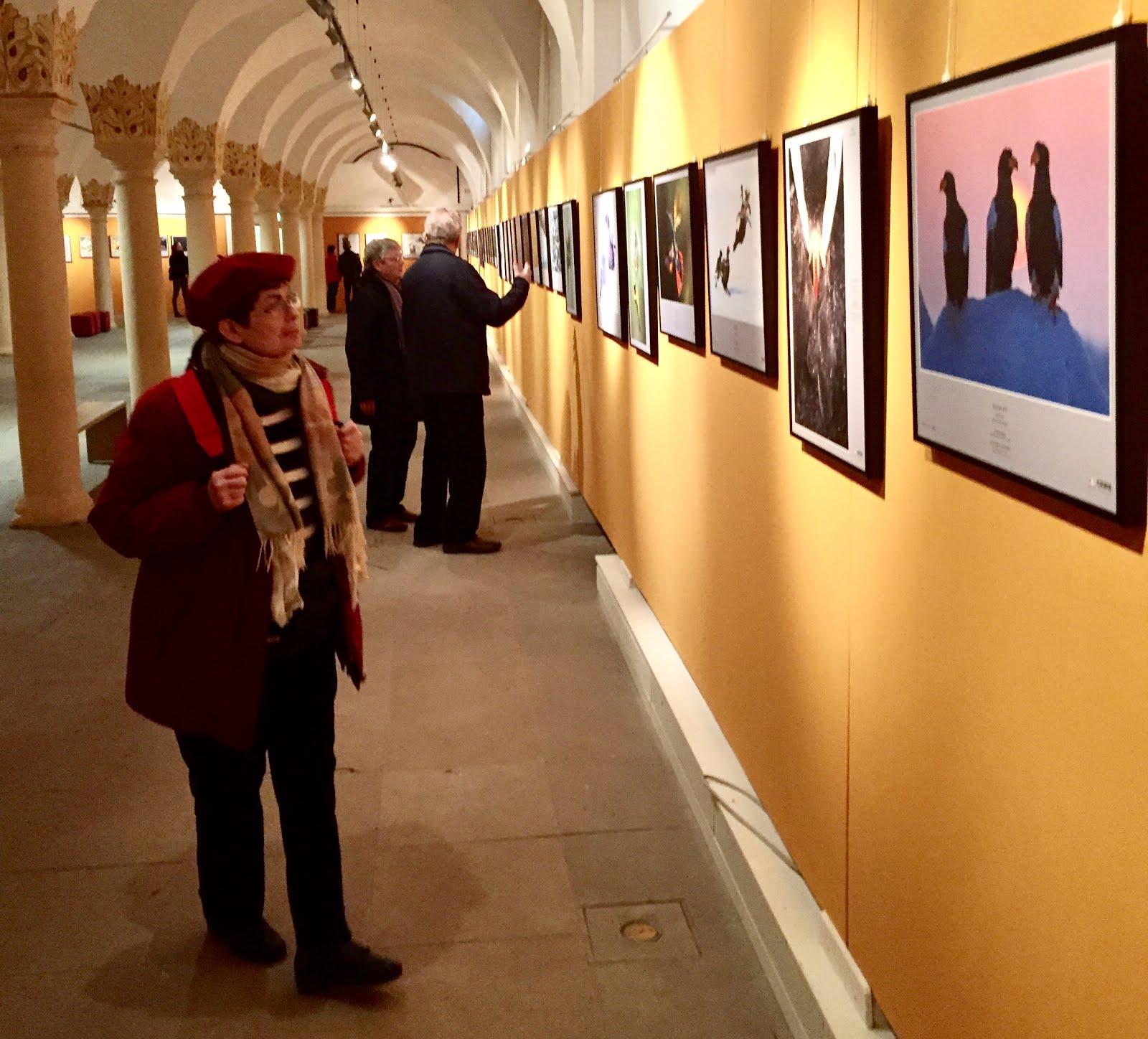 Ausstellung: Glanzlichter der Naturfotografie 2016