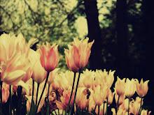 podrán cortar todas las flores pero no podrán matar la primavera.