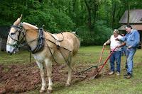 mule plow