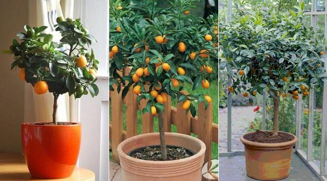Noticias en tus manos - Plantar arboles frutales en macetas ...