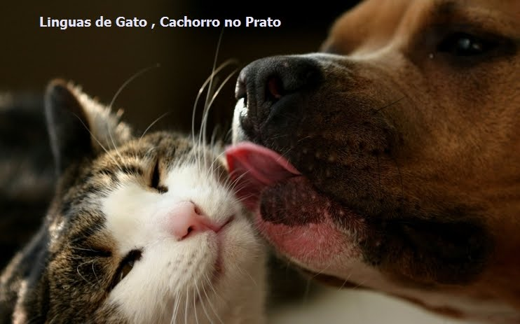 Línguas de Gato Cachorro no Prato!