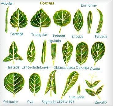 Desde las gavetas de mi escritorio funci n de las hojas for Hojas ornamentales con sus nombres