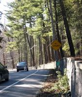 Tree Removal Planned for Vanderbilt Mansion NHS