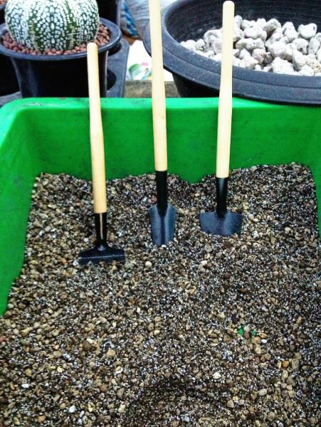 ส่วนผสมของดิน เพาะปลูกแคคตัสและไม้อวบน้ำ
