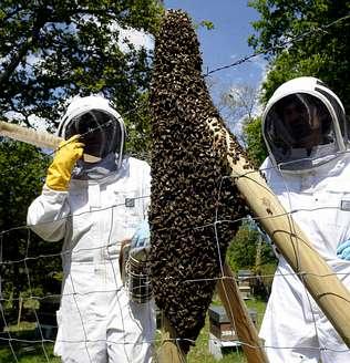 Planeta rural campo jard n c mo capturar enjambres de for Ahuyentar abejas jardin