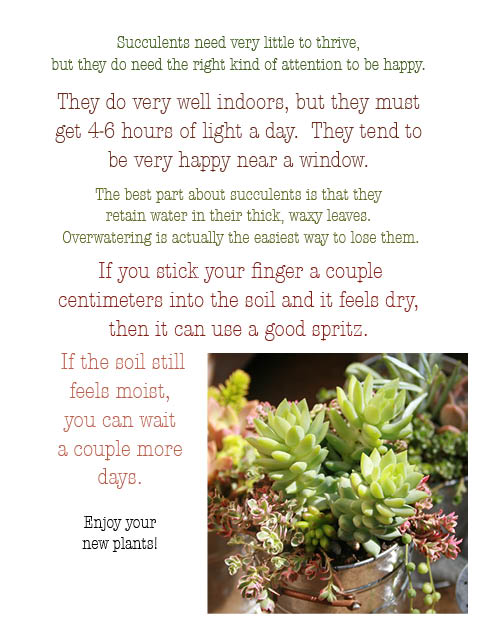 Image Gallery Succulent Care
