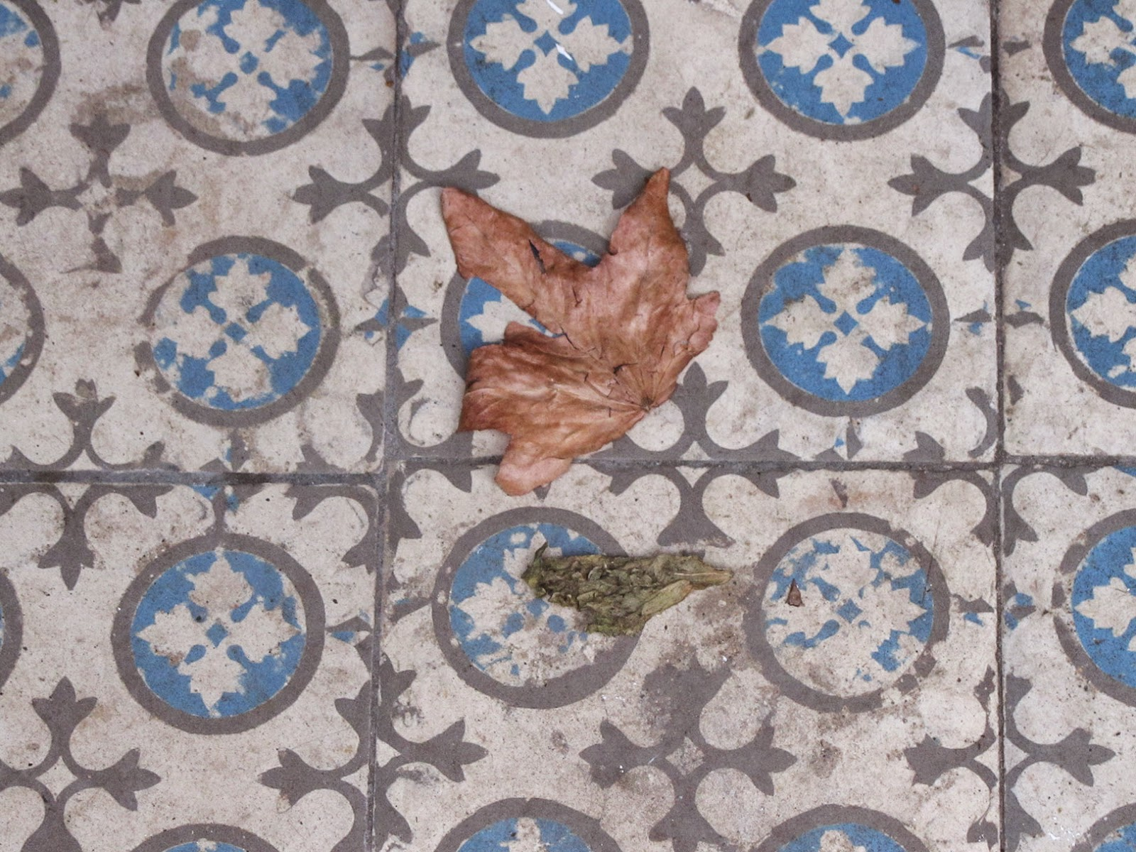 blue tiles and dried up leaves
