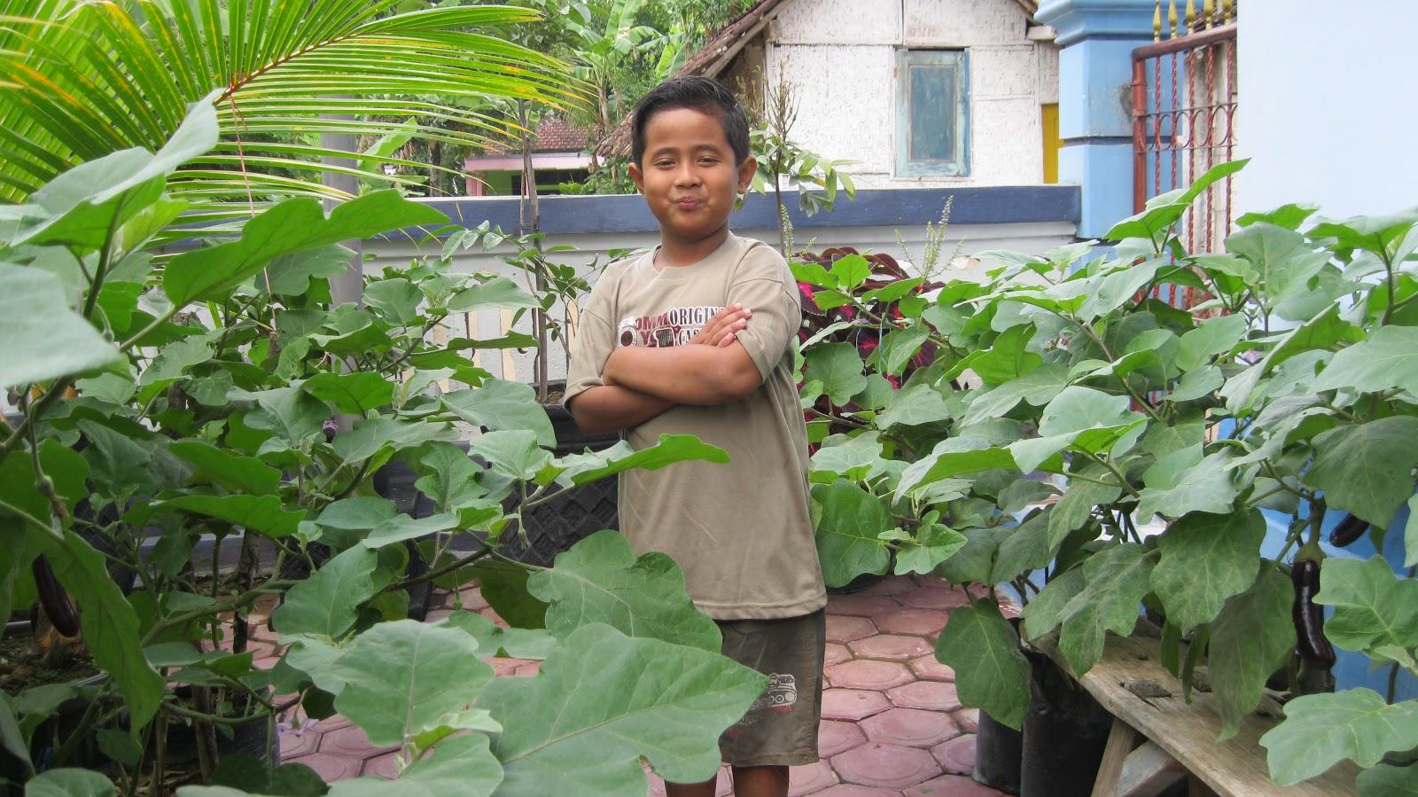 Foto-foto tadi mulai sejak persiapan menanam terong ungu dan cabe ...