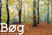 http://kolonihavelivet.blogspot.dk/2015/11/bg-fagus-sylvatica.html