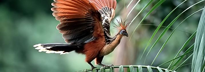 Ученые: птицы учатся усвоих сородичей