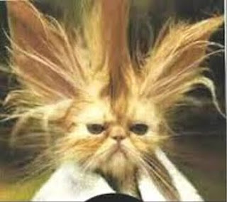 funny qesharak grappig lustig gracioso amuzant cat kitten pussy mace macka kat kass katze gato con kissa pets Haustiere huisdieren animaux de compagnie kucni ljubimci augintiniai