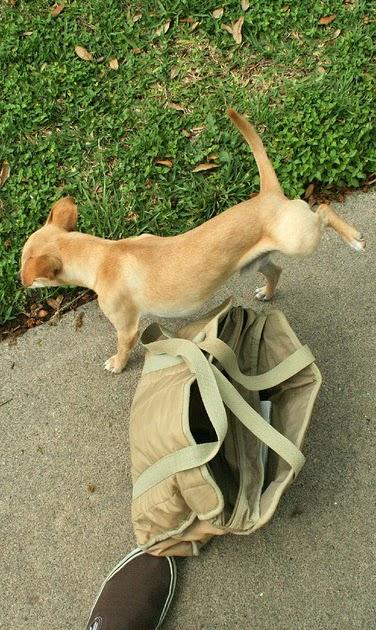 Addestramento ed educazione dei cuccioli e del cane adulto for Educazione cane