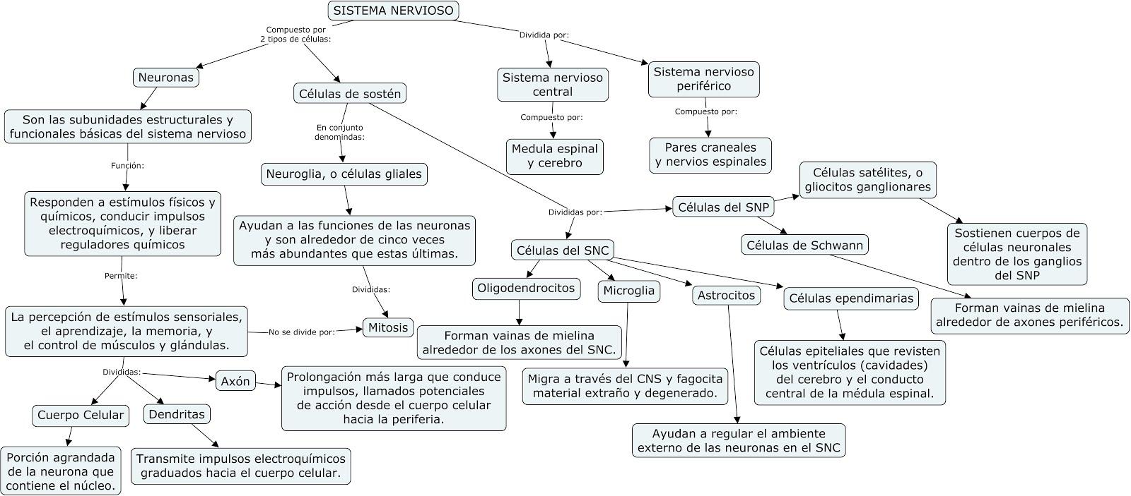 Fisiología Básica y Médica: Mapa Conceptual \