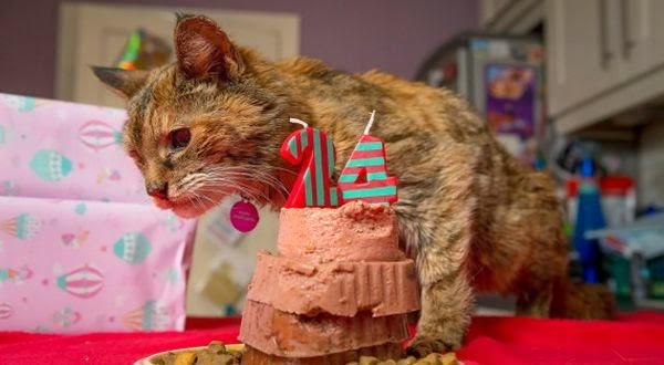 Poppy, Kucing Tertua di Dunia Gemar Makan Kebab