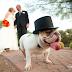 Adoráveis cachorros emprestam seu charme para fotos de casamento