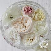 Jeg elsker også roser. Se her hvilke roser vi har i haven.