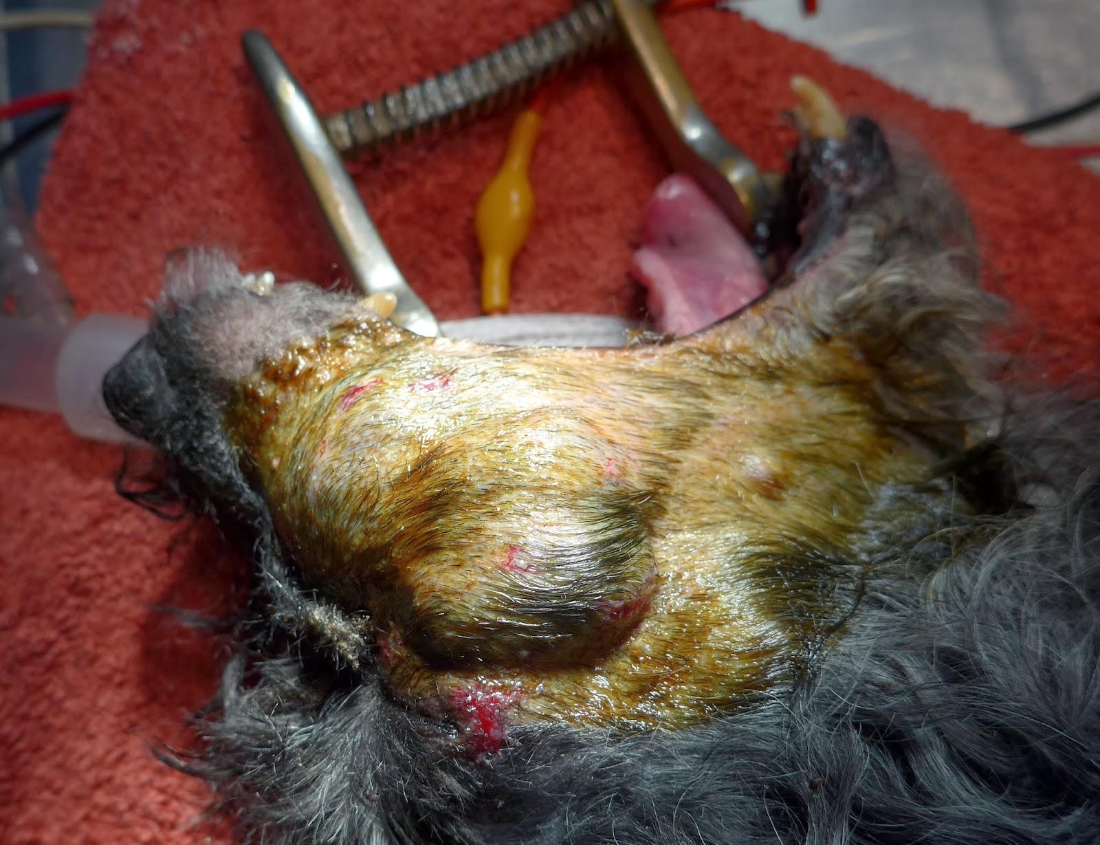 tumor bucal