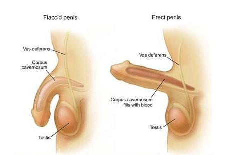 cara membuat obat kuat ereksi alami spesialis jamu kuat lelaki