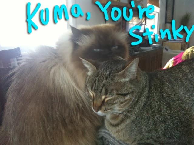 Goma_Clean_Kuma_01