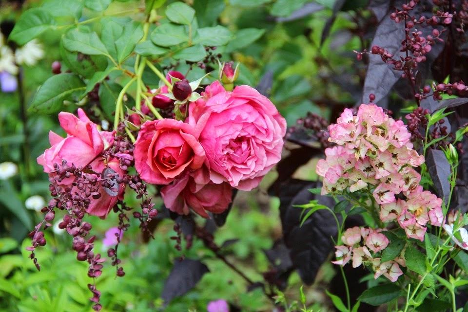 Derri re les murs de mon jardin coups de c ur 2014 1 - Derriere les murs de mon jardin ...