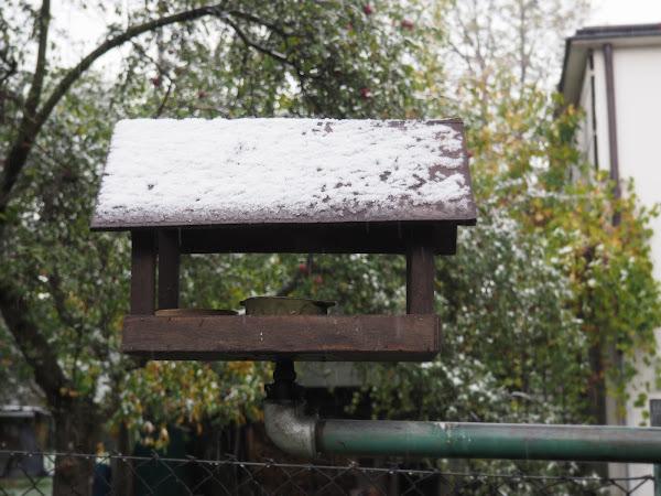 13. Dokarmianie ptaków zimą.