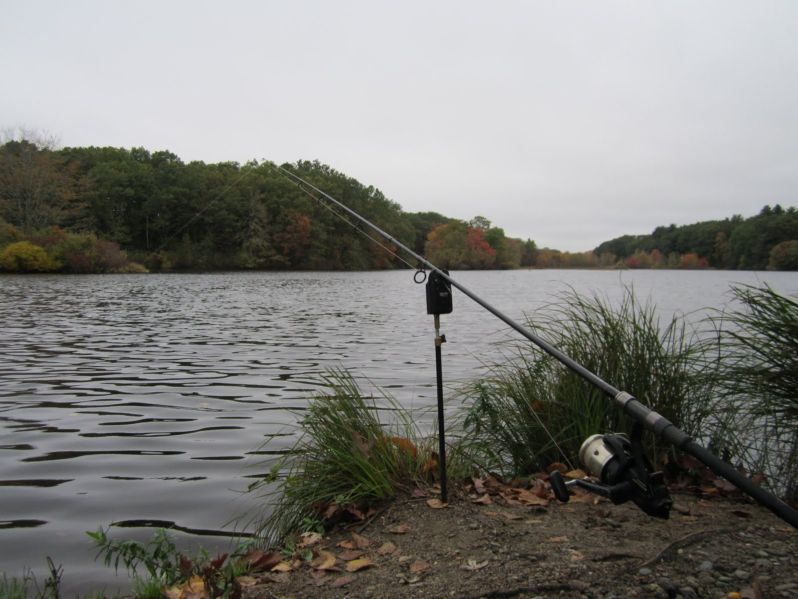 Rhode island carp fishing thinking about alarms for Fishing in rhode island