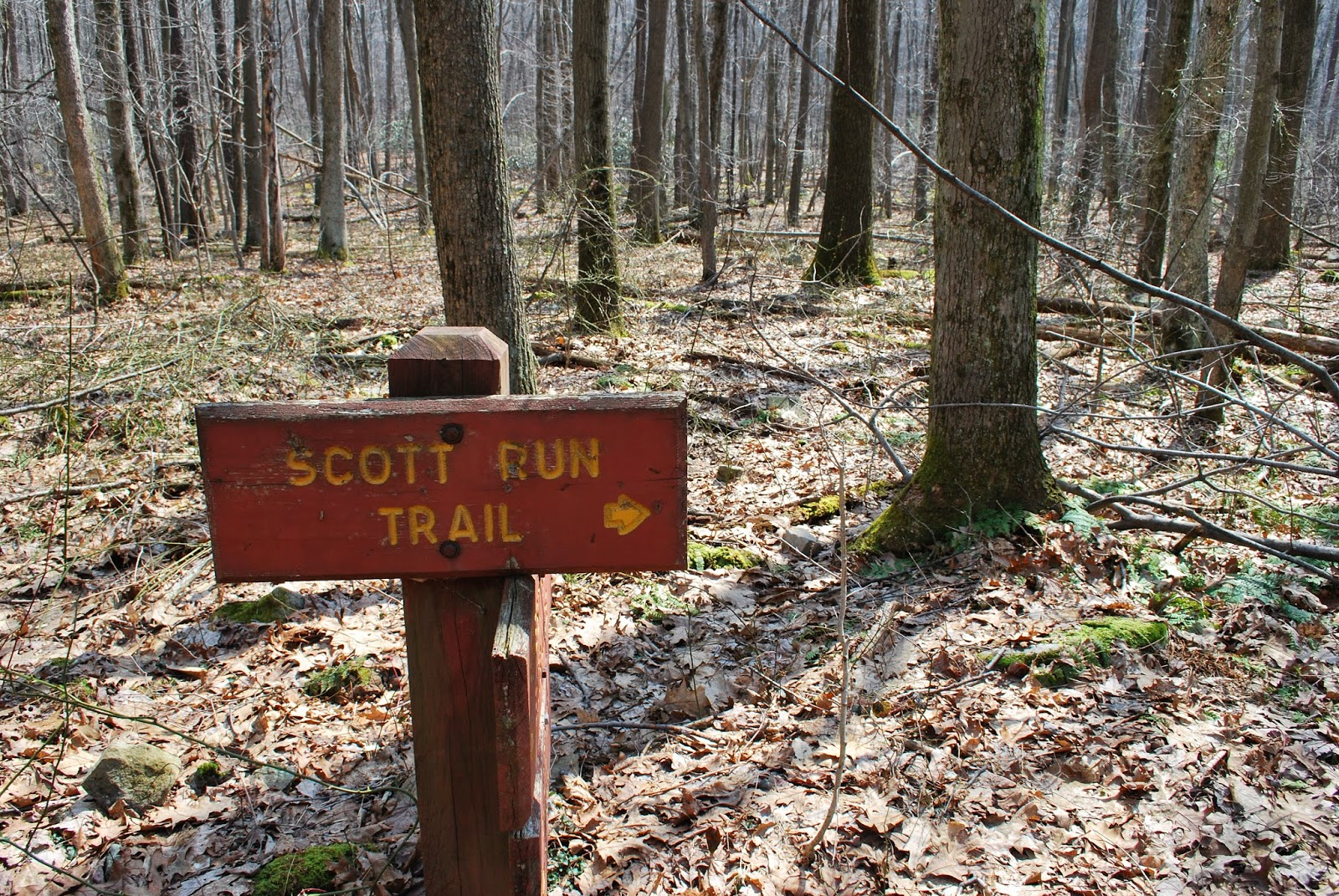 The trail head of Scotts Run Trail at Coopers Rock State Forest
