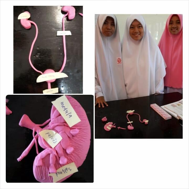 Idea P P Sains Bina Model Sistem Urinari