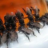 abelhas cupiras  foto de Obede RN