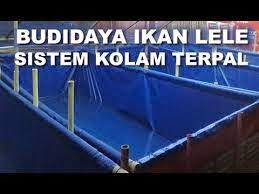 metode kolam terpal budidaya lele