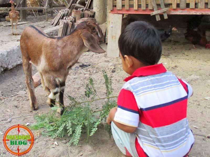 Mengenalkan Anak Pada Lingkungan Sekitar