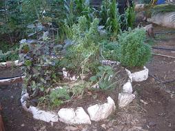 Horta Espiral de Ervas medicinais