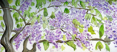 Not not tana glicine wisteria for Glicine disegno