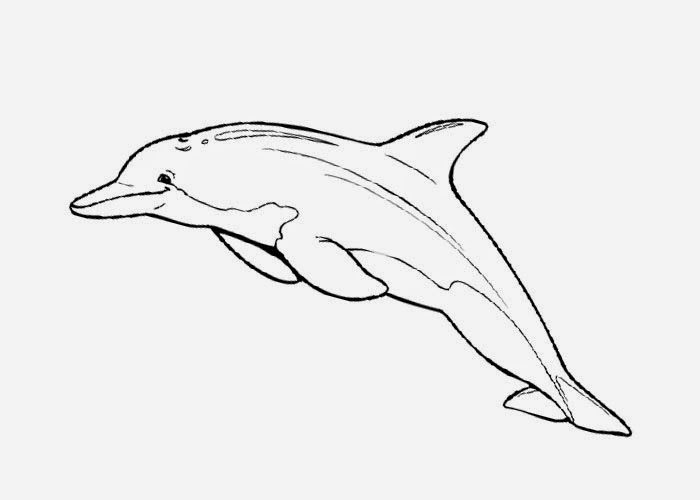 dolphin coloring pages free coloring pages and coloring books for kids