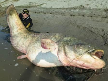 Homem captura maior peixe do Mundo... E veja o que aconteceu durante - CHOCANTE
